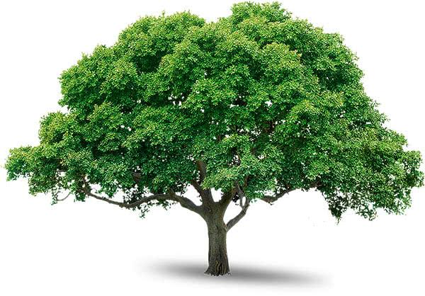Услуги по перевозке деревьев манипулятором